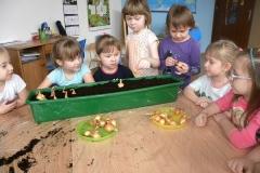Przedszkolaki sadzeniaki